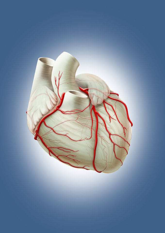 Vitamine și minerale pentru sănătatea inimii și a vaselor de sânge