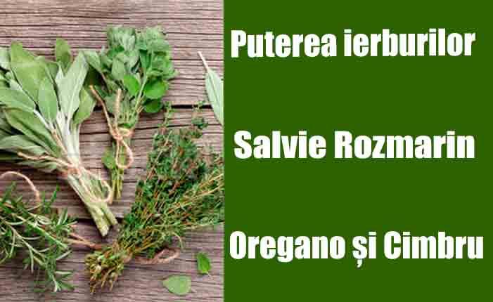 Puterea ierburilor : Ce boli tratează Salvia, rozmarin, oregano și cimbru