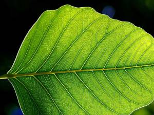 Leaves Of Architecture Concepts Rethinking Bim