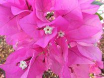 Flower Pattern, Pink, White