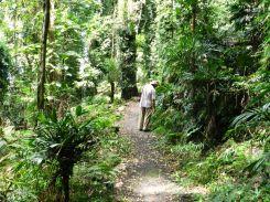 Wonga Walk 1, Dorrigo NP, Waterfall Way