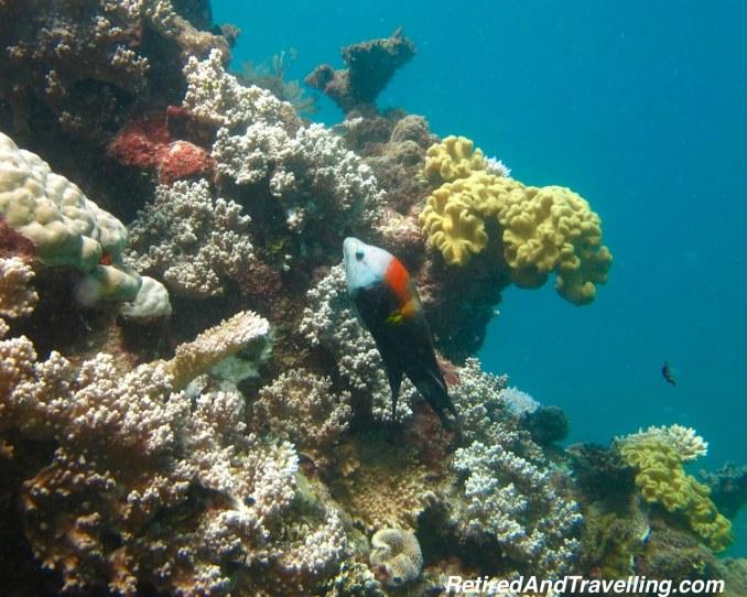Scuba - Snorkel or Scuba the Great Barrier Reef.jpg