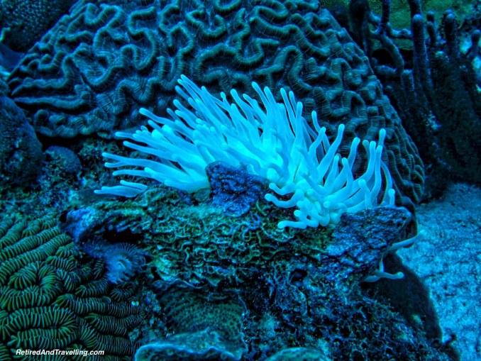 Scuba Diving Coral - Curacao in Hurricane Season.jpg