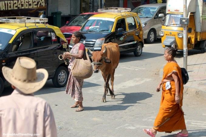 Mumbai Cows - Religious Diversity on a Tour of Mumbai.jpg