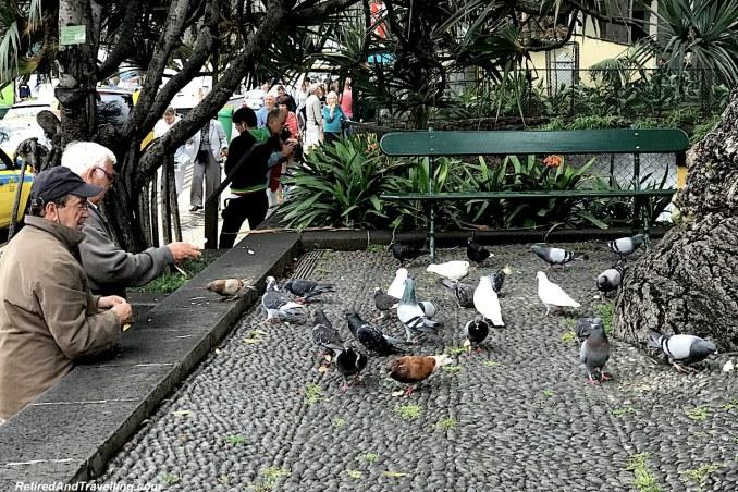 Funchal Town Park Pigeons.jpg