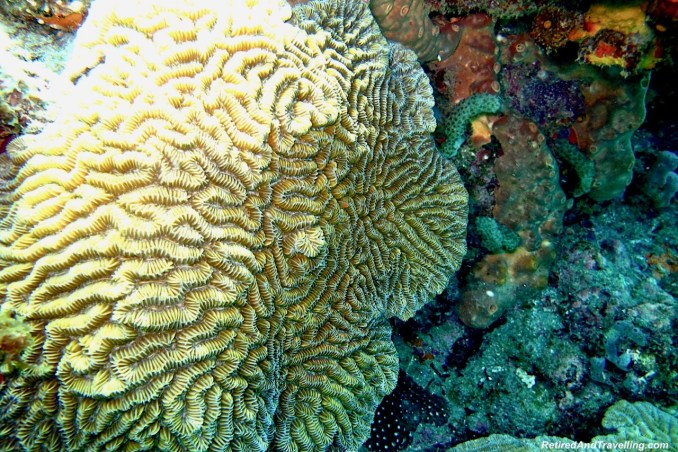 Brain Coral - Scuba Dive Under The Pitons In St. Lucia.jpg