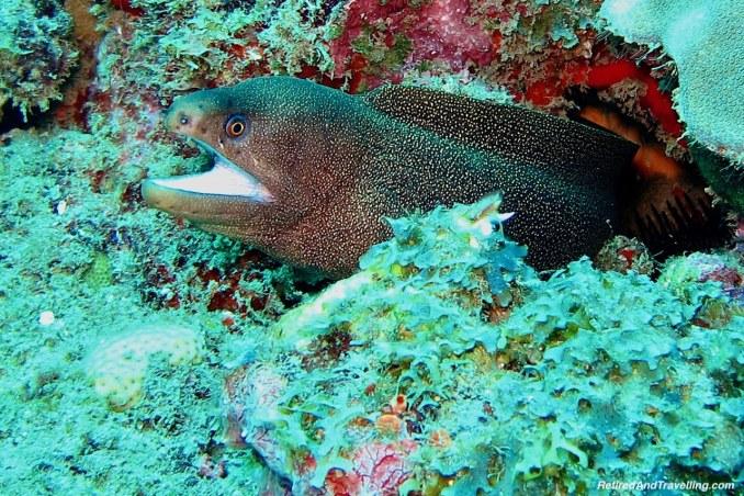 Black Spotted Moray Eel - Scuba Diving in Grenada.jpg
