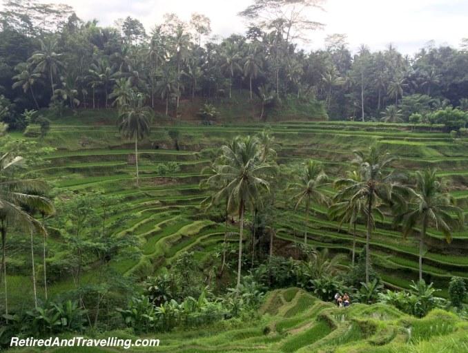 Ubud Rice Terrace View Bali SE Asia - Hot Spots In The Winter.jpg