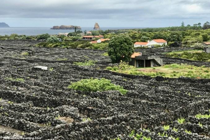 Criacao Velha Wine Fields Pico Azores Portugal - 4 Weeks In Portugal.jpg