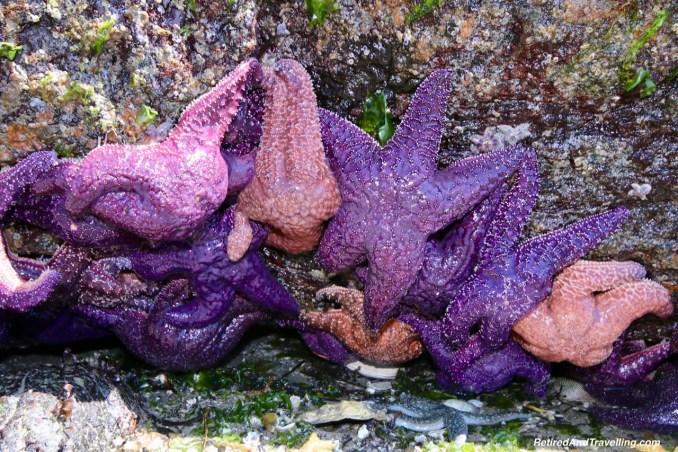 Purple Sea Star Half Moon Bay Beaches - On The Sunshine Coast in BC.jpg