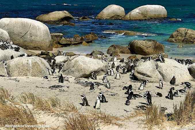 Cape Town Boulder Beach African Penguin.jpg