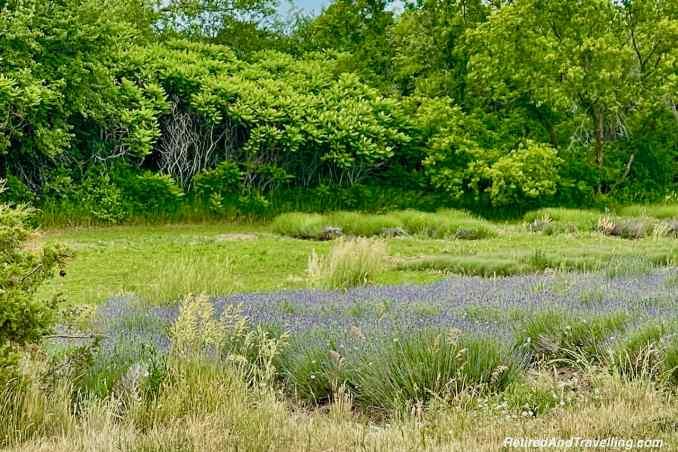 Lavender Farms.jpg