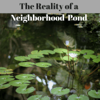 The Reality of a Neighborhood Pond