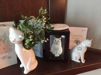 cat memorial