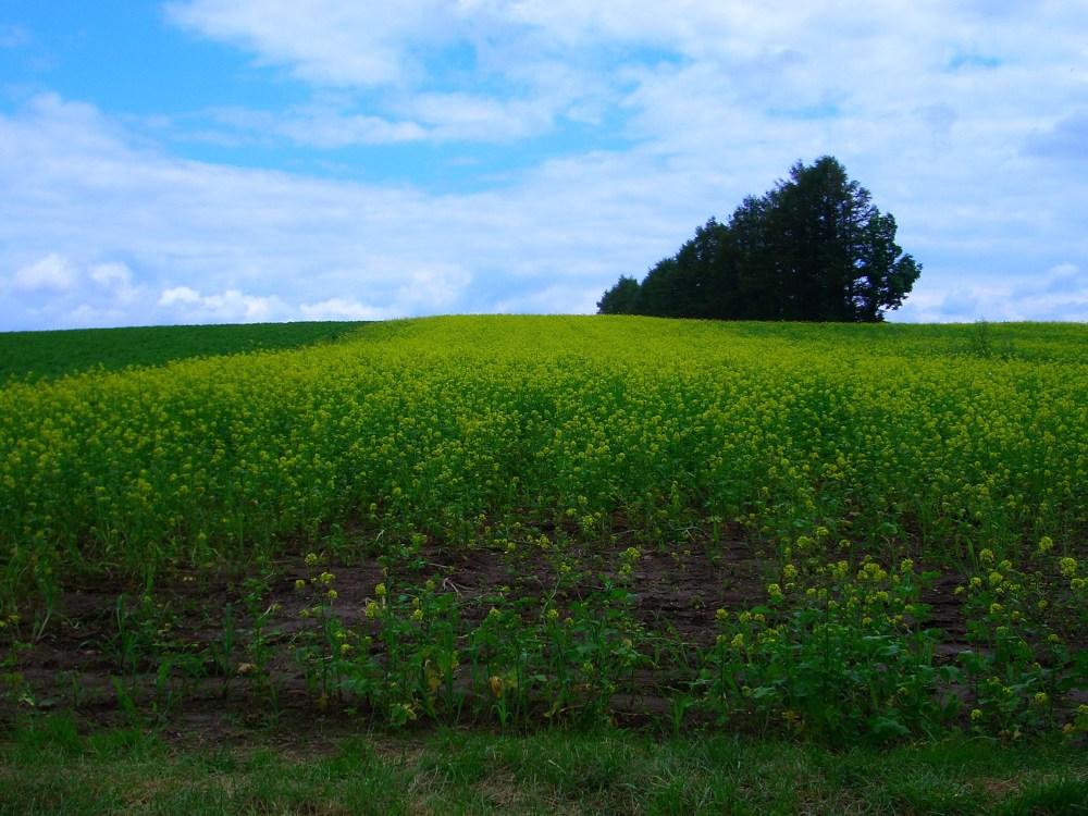Patchwork Road Rolling Hills in Hokkaido, Japan (4/6)