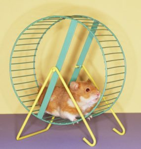 Hamster Getting a Workout on Spinning Wheel --- Image by © Royalty-Free/Corbis