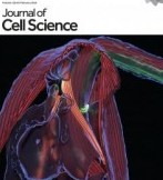 metformin congestive heart failure