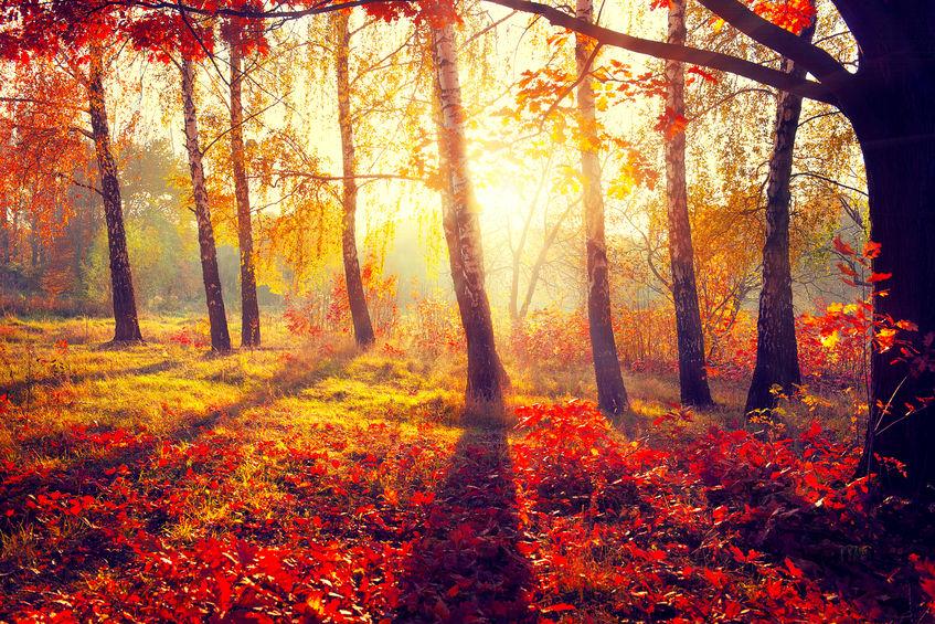 32077042 - autumn. fall. autumnal trees in sun rays