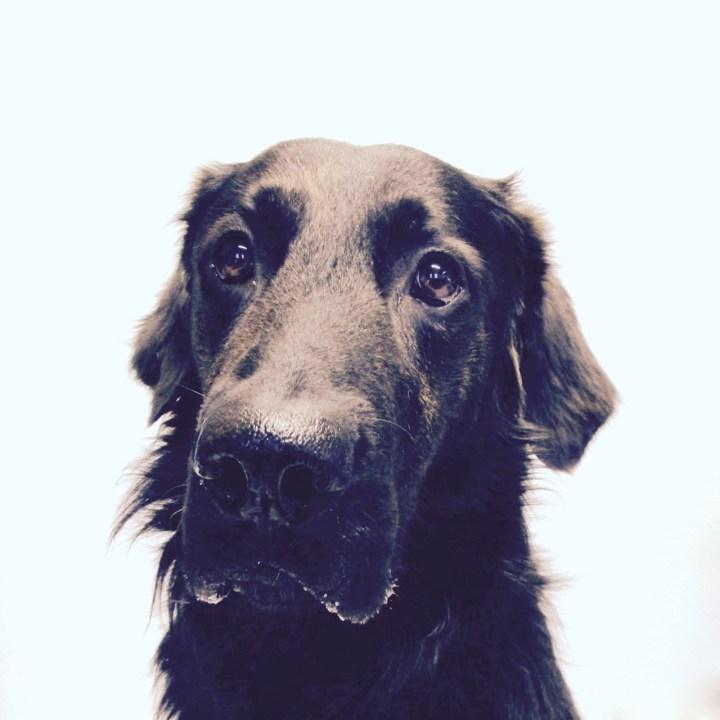 Rüde Vince - Hahn/Hund im Korb