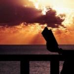 Darius Tred, blog, retroblog, viaggiare leggendo