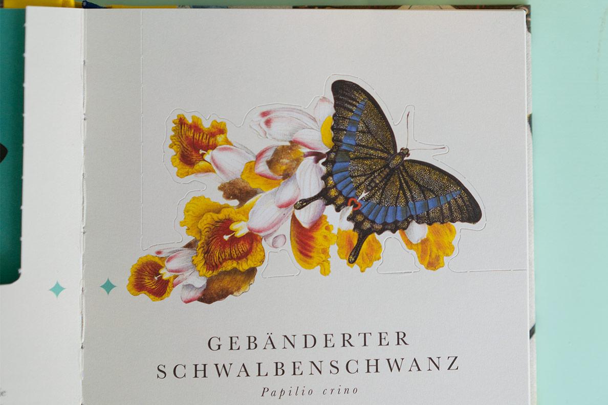 Ein Blick ins Buch Die 50 schönsten Schmetterlinge der Welt vom DK Verlag