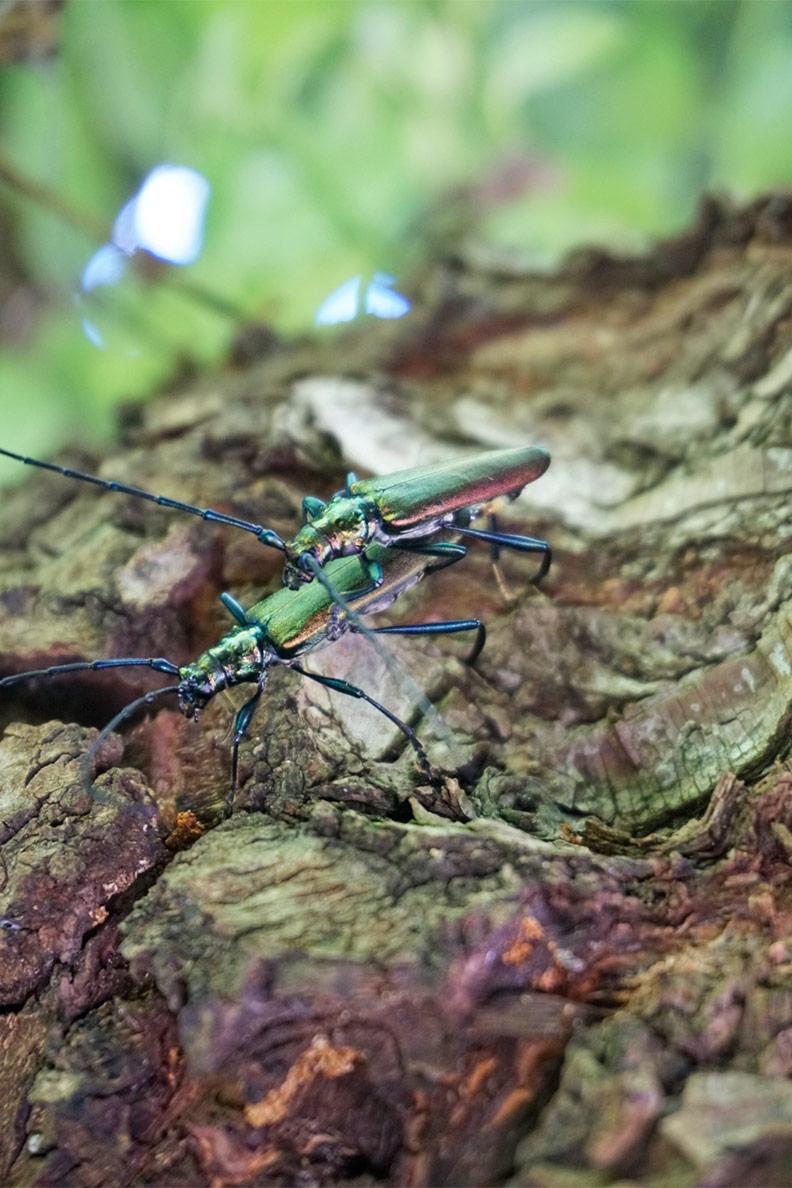 RetroCats Wochenrückblick: Insektenfotografie