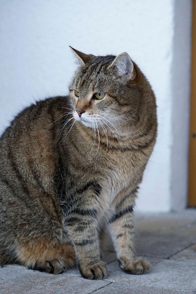RetroCats Katze im Garten