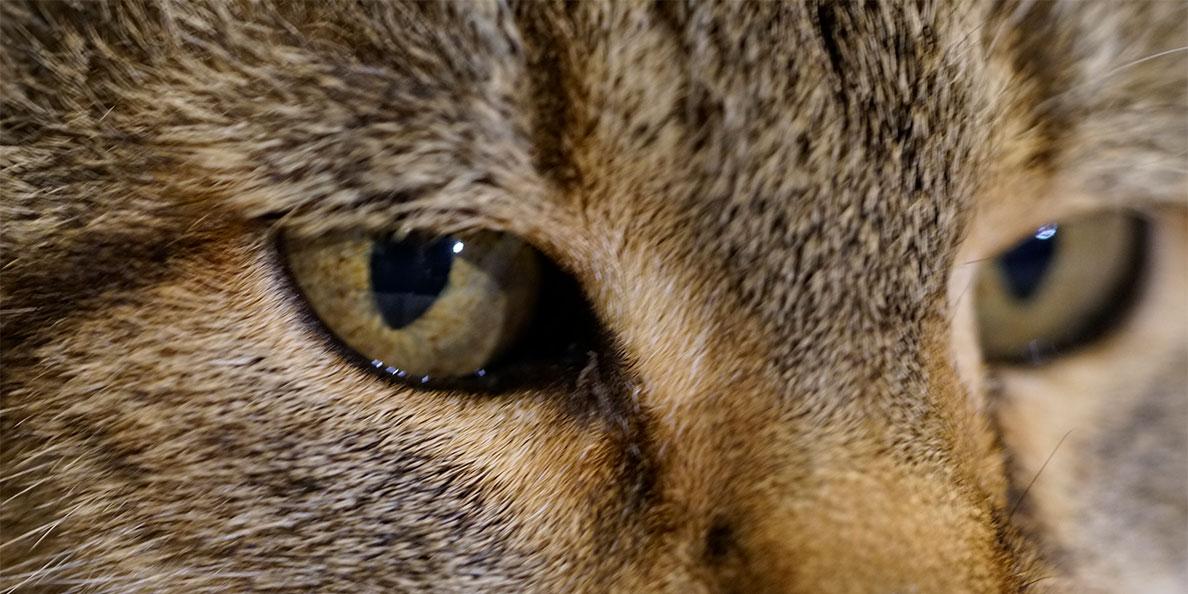 Katzenaugen von RetroCats Kater