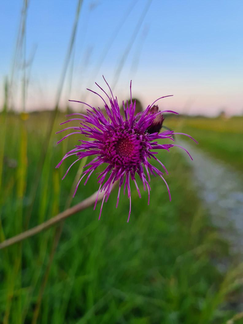 Eine Blüte am Wegesrand