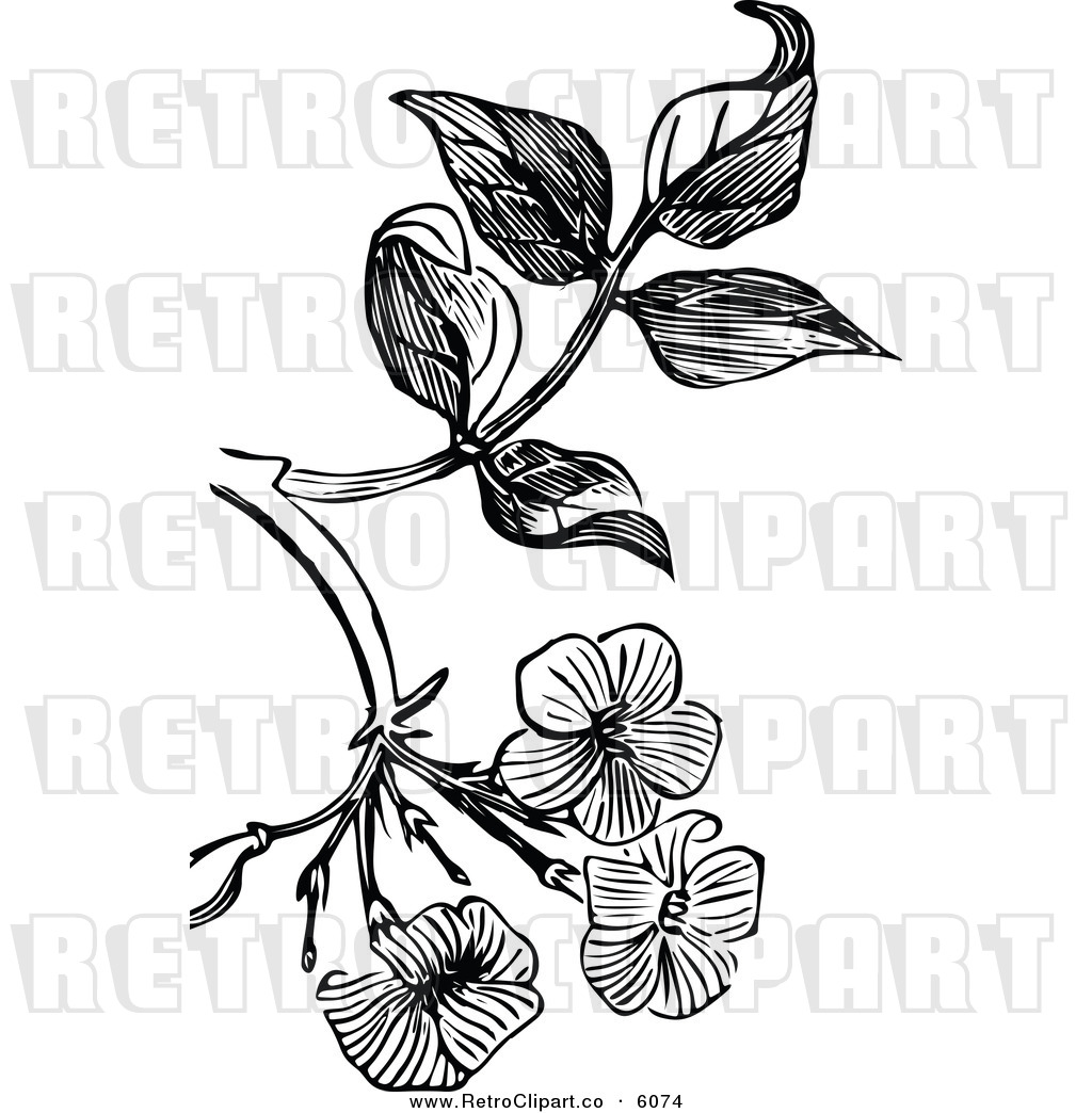 Jasmin Clip Art Black And White