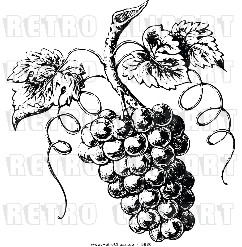 grape vine coloring page harry potter harry potter houses of