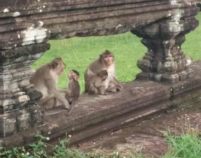 Monkeys - Angkor Wat