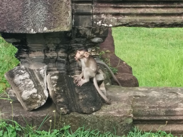 Monkeys - Angkor Wat2