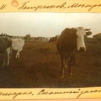 Кiрмаш в Петрикове летом 1912 года - серия фотографий (188)