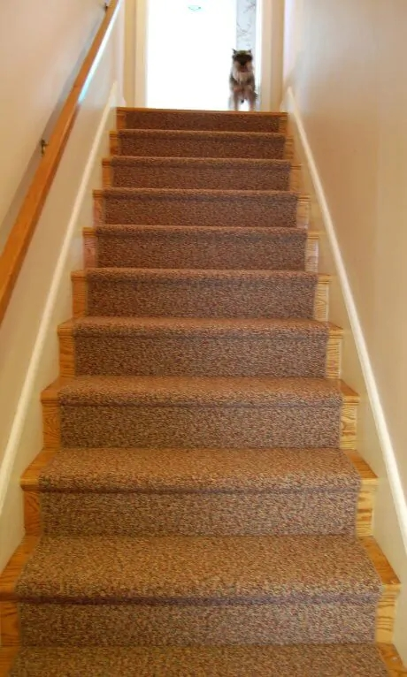 Carpet Runner For The Oak Stairs And Astro   Commercial Carpet For Stairs   Oak   Interior   Carpeting   Timber   Wool