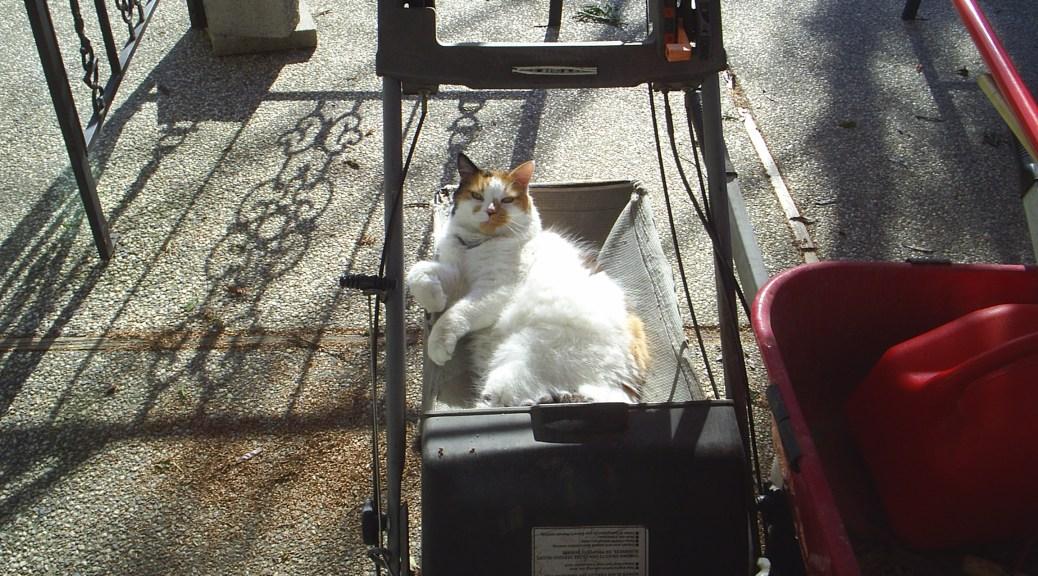 on ur lawnmower, takin a nap