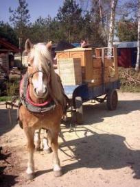 Umzug mit Pferdewagen