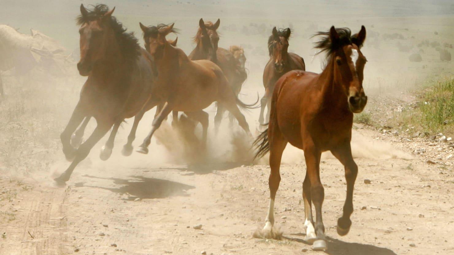 170710-Ketcham-wild-horses-tease_qzeter