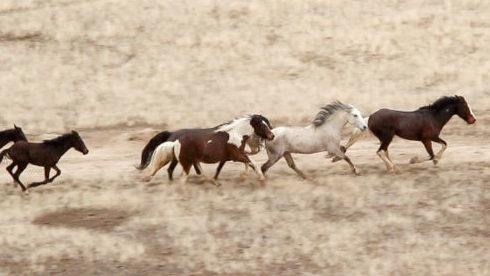 Cedar Mountain Horse Roundup