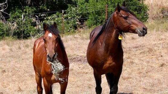DG geldings at SLO