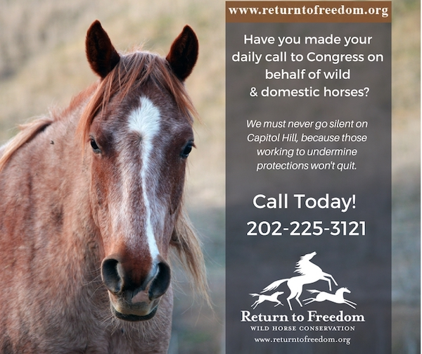 Have you made your daily call to Congress on behalf of wild & domestic #horses? We must never go silent on Capitol Hill, because those working to undermine protections won't quit. Call Today! 202-225-3121.