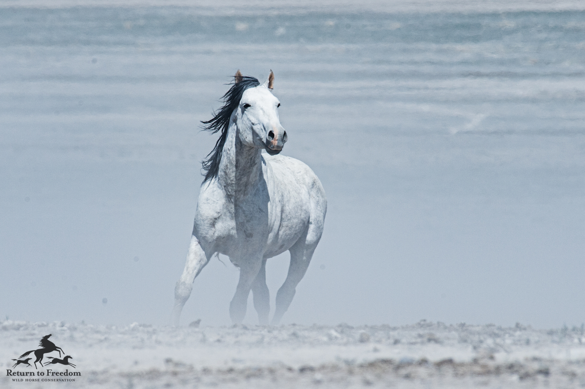 onaqui pale horse – meg f