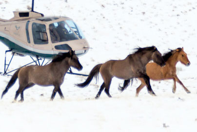 President Trump and Wild Horses