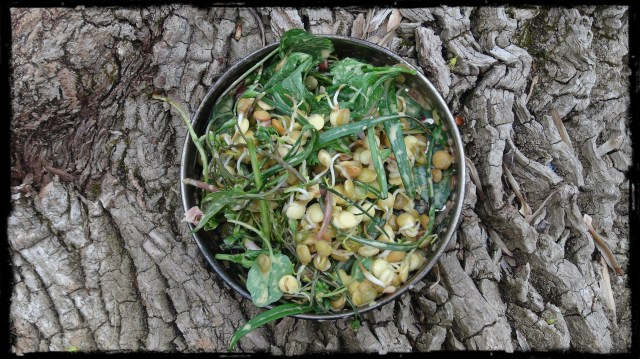 foraged salad compressed