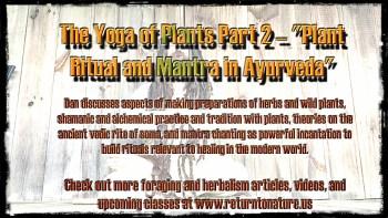 dan-yoga-of-plants-border