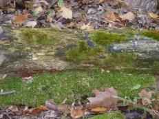 moss on dead tree