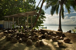 """Fresh coconuts were readily available. Perhaps too available. In fact the only danger we ever faced was the impending threat of getting hit by a falling coconut."" Alea Rouse"
