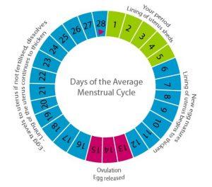 irregular-menstrual-cycle