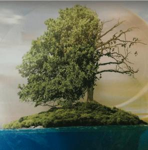 Un arbre, en vie, en perdition.