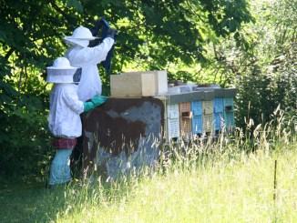 Wildkatzen, Kräuter & Bienen